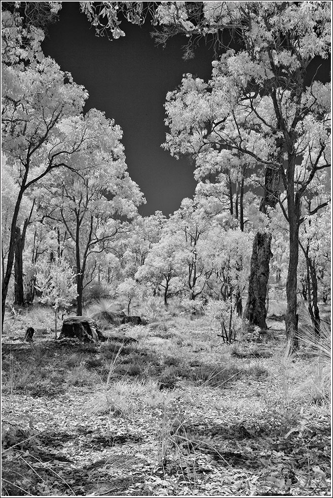 South west quarter of Mahogany Creek forest