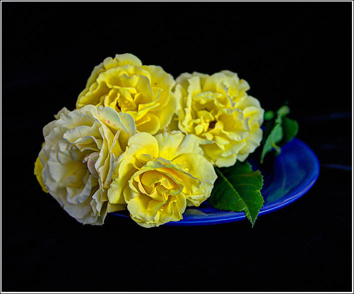 A four rose still life