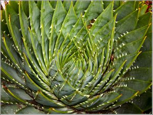Another-Aloe (1).jpg