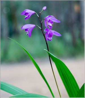 Ground-Orchids.jpg