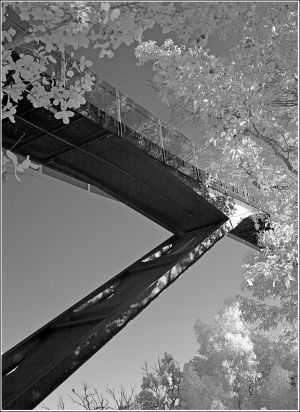 KIngs-Park-bridge.jpg