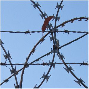 Razor-wire-and-gum-leaf.jpg