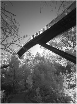 Treetop-bridge-contre-jour.jpg