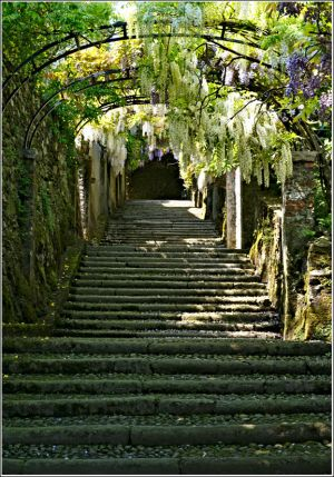 Wisteria-steps-Isola-Madre.jpg