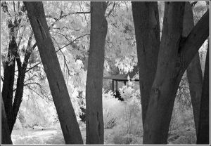 looking-through-trees.jpg