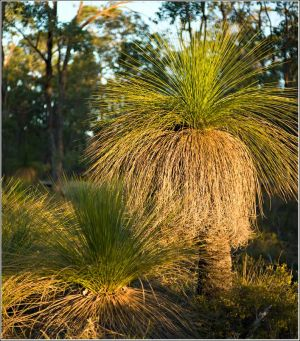 Forest-Grass-Tree.jpg