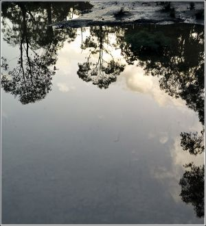 Reflections-in-a-puddle.jpg