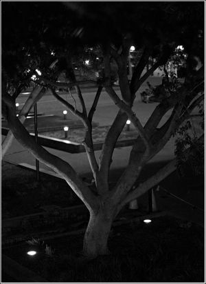 City-tree-with-lights.jpg