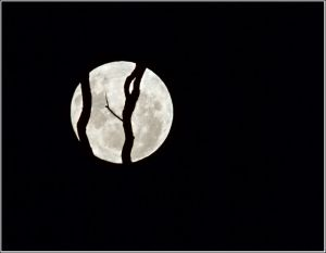 Full-moon-rising.jpg