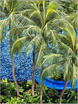 Palms-and-a-pool.jpg